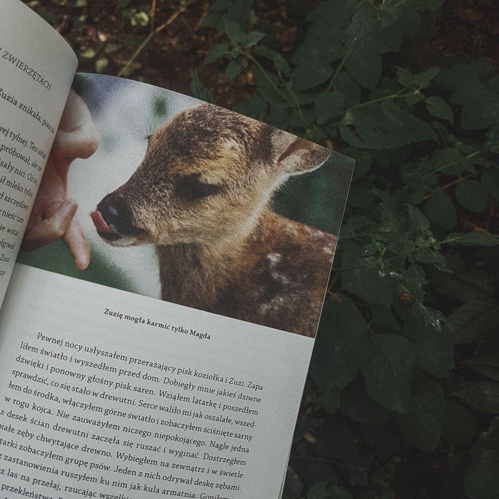 """Marcin Kostrzyński """"Gawędy o wilkach i innych zwierzętach"""" Wydawnictwo Świat Książki - sarenka Zuzia"""