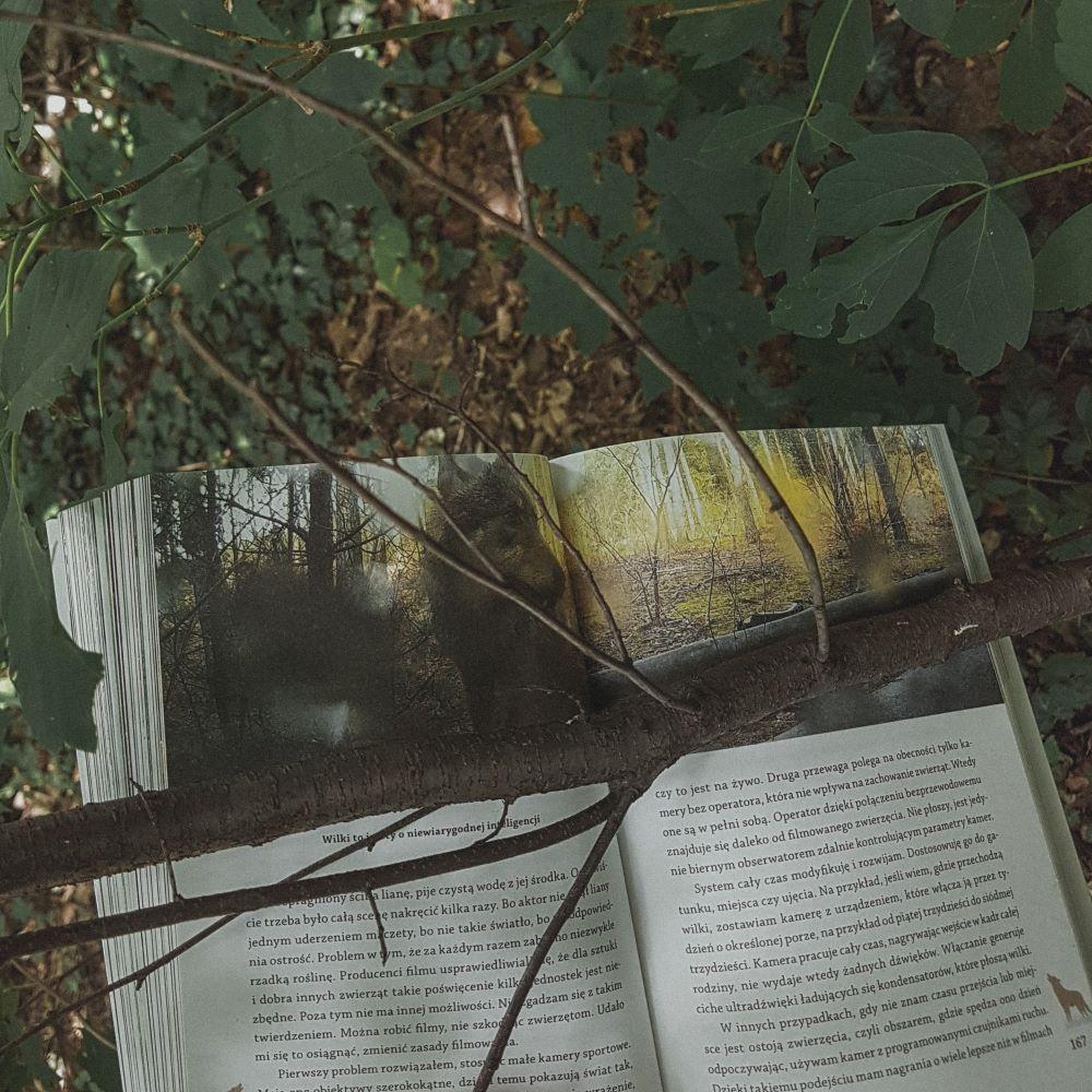 """Marcin Kostrzyński """"Gawędy o wilkach i innych zwierzętach"""" Wydawnictwo Świat Książki - Wilki to zwierzęta o niezwykłej inteligencji"""