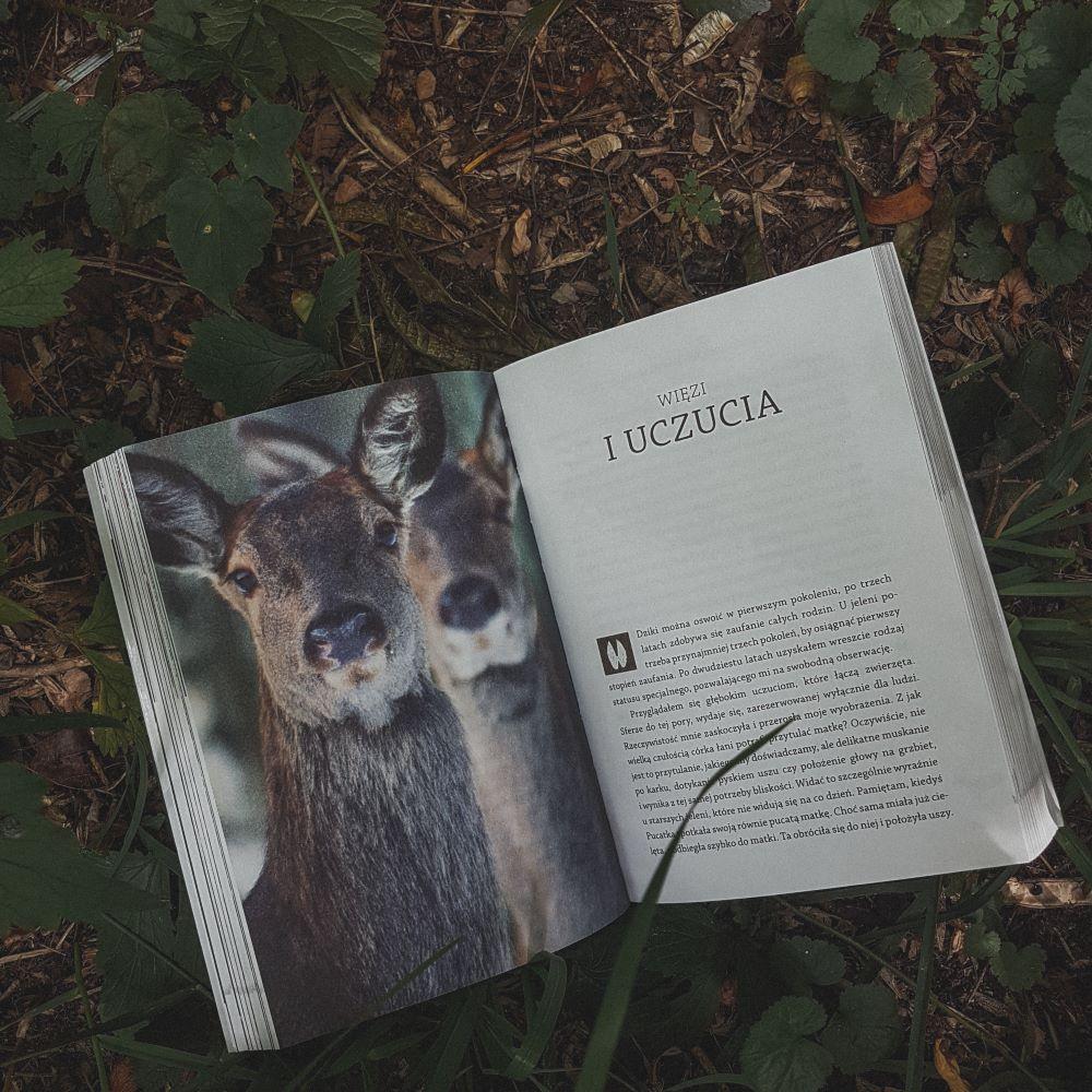"""Marcin Kostrzyński """"Gawędy o wilkach i innych zwierzętach"""" Wydawnictwo Świat Książki - Więzi i uczucia"""